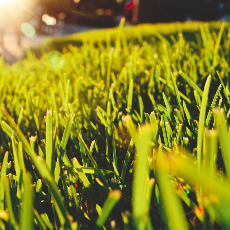 Long Green Grass