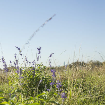 Skyline Field